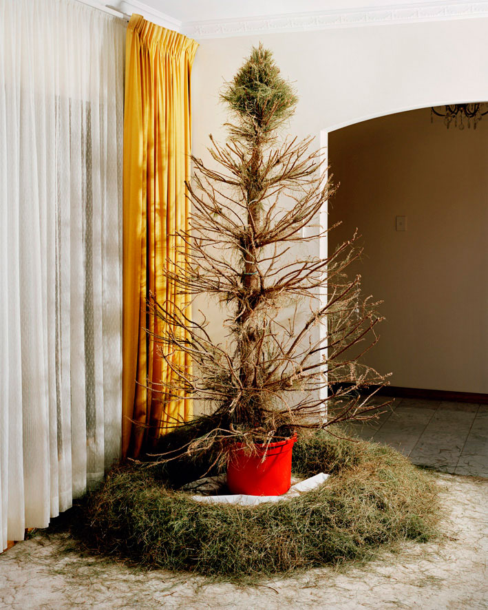 Story Behind Christmas Tree: Trent Parke: The Christmas Tree Bucket