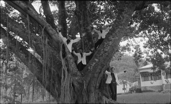 tabu-2012-006-band-in-tree